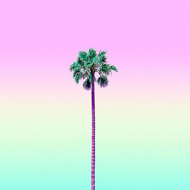 Hello LA ✌🏽️| via @mattcrump #goodmorning #losangeles #palmtrees