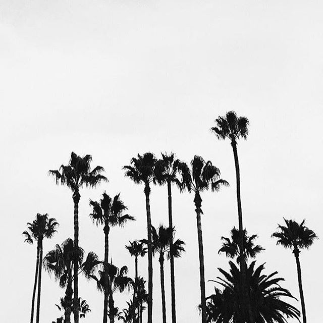 Good morning LA 🌴🌴🌴 #itsfriday #goodmorning #losangeles #palmtrees