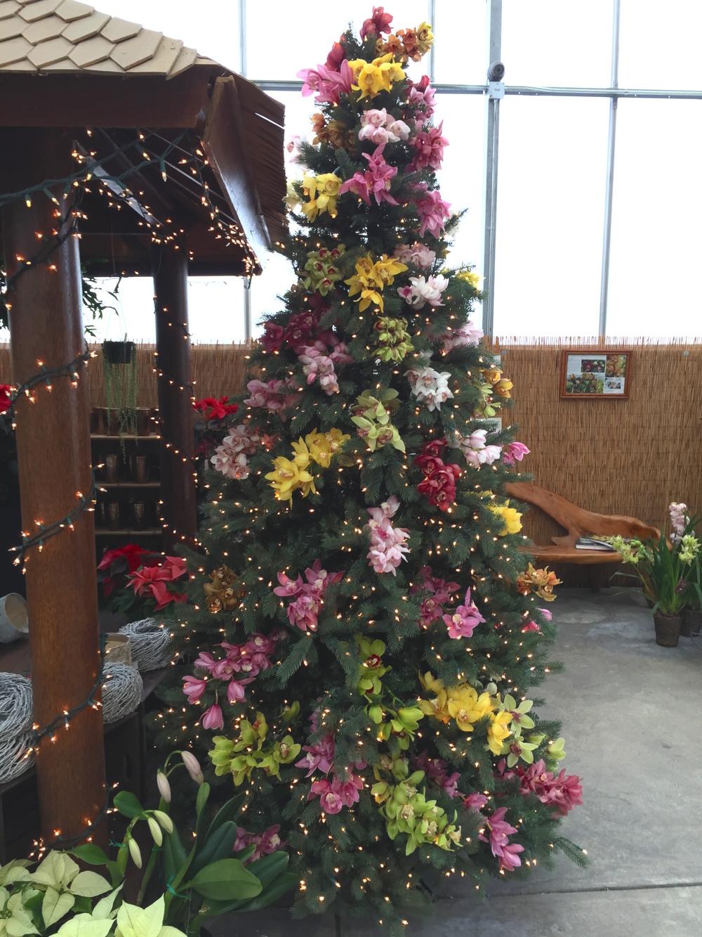 orchid tree.jpg