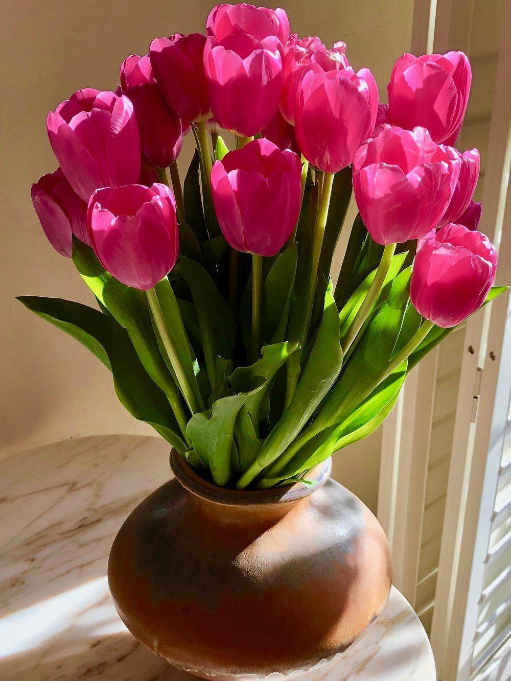 tulippinkfeb.jpg
