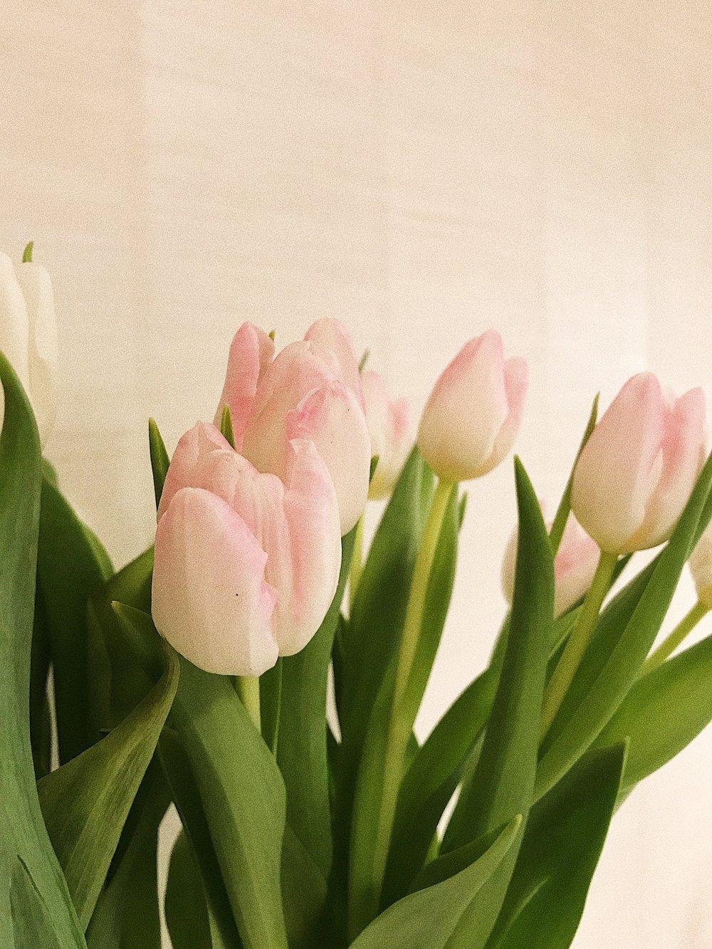 Fresh tulips.
