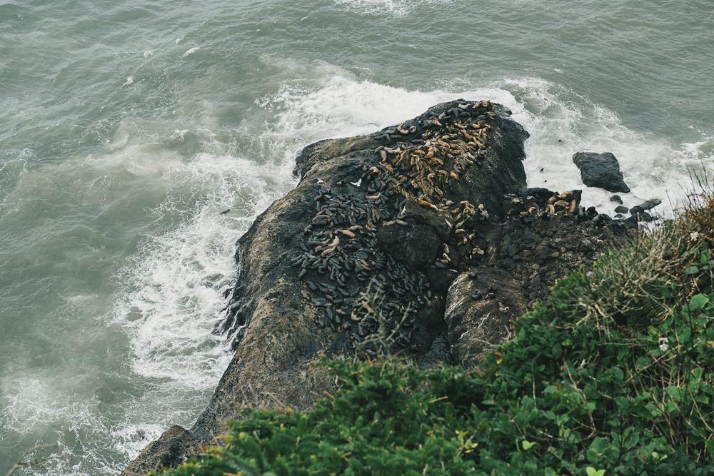 Oregon-Coast