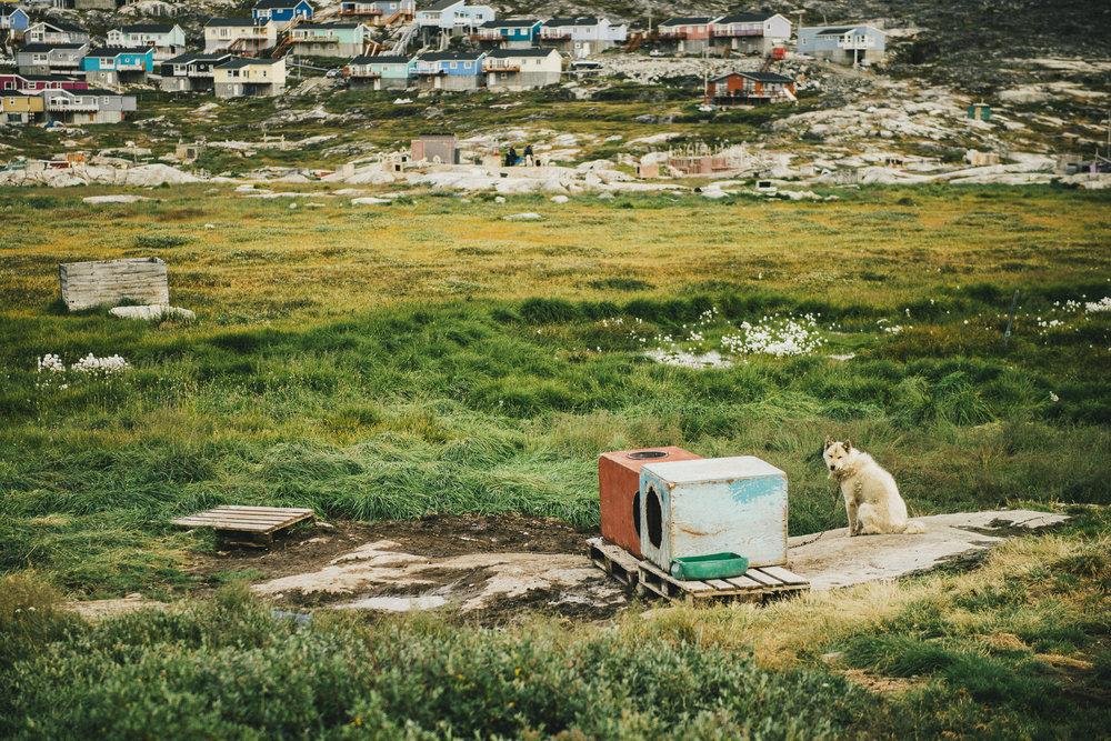 CindyBekkedam_Greenland_05.jpg