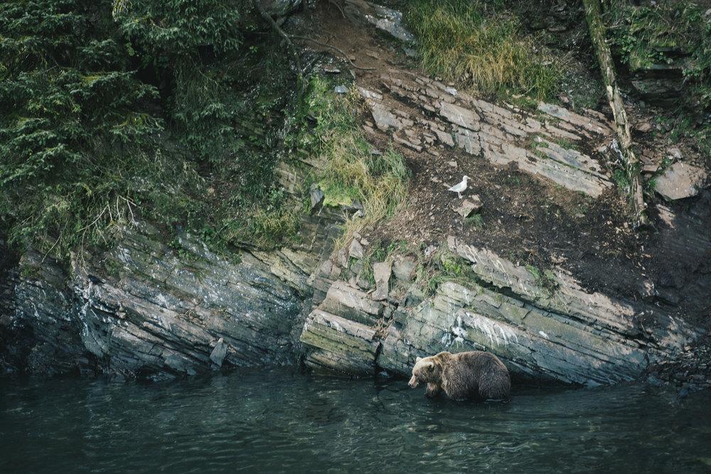 CindyBekkedam-Alaska-10.jpg