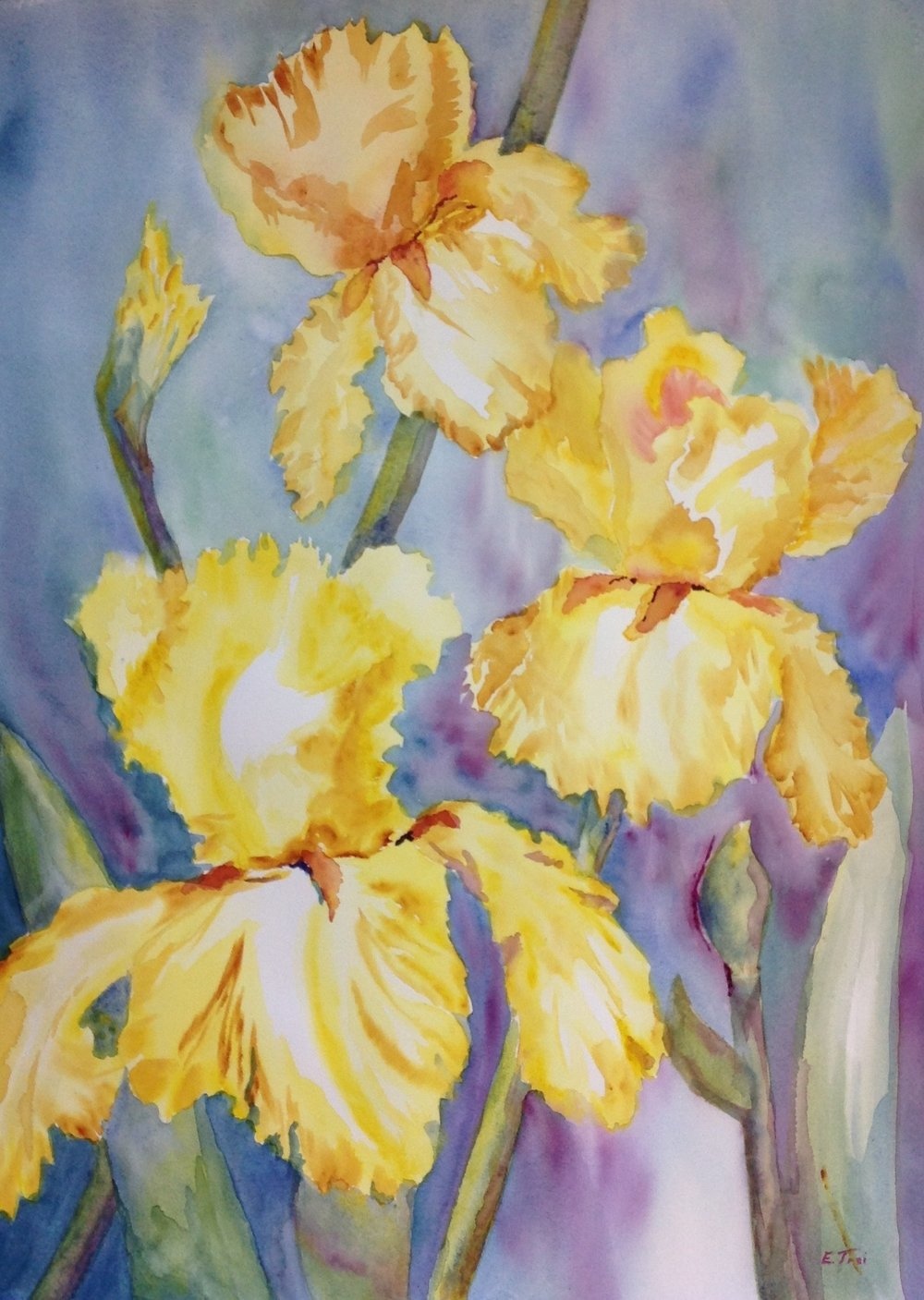 Yellow Gold Iris