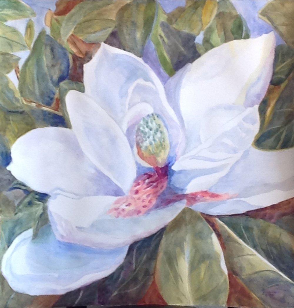 Seedling Magnolia