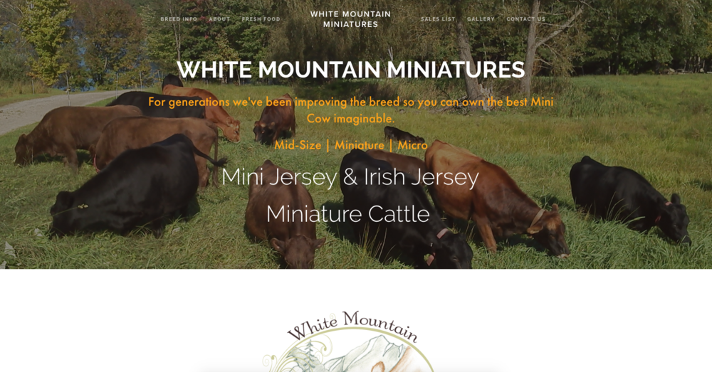 White Mountain Miniatures Mini Cattle East