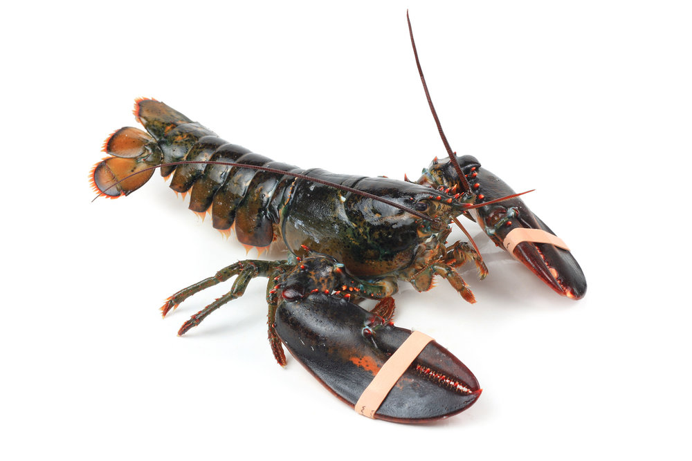 Food Lobster Seafood 119842464.jpg