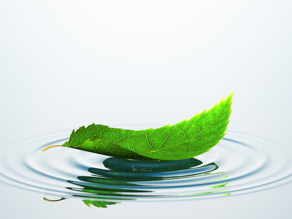 Water leaf puddle -496438640.jpg