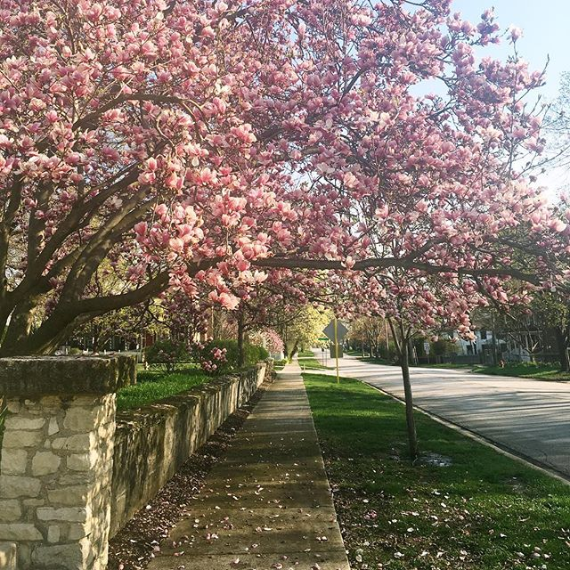 Spring blooms 🌸