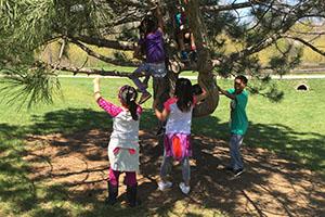 JUMP_tree climbing.jpg
