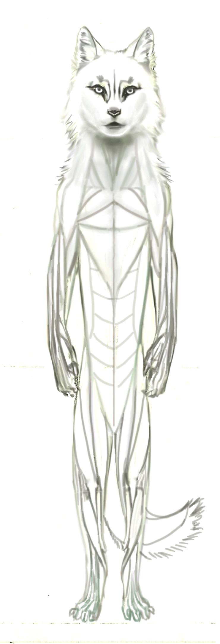 Volx Anatomy.jpg
