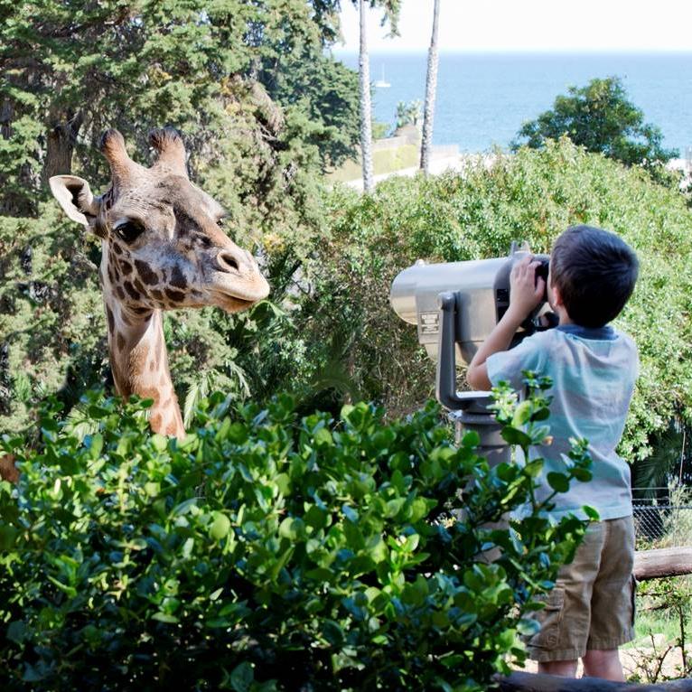SB Zoo Giraffe Views.jpeg