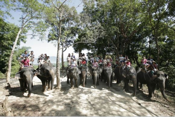 DBS Phuket- Elephant Ride.JPG
