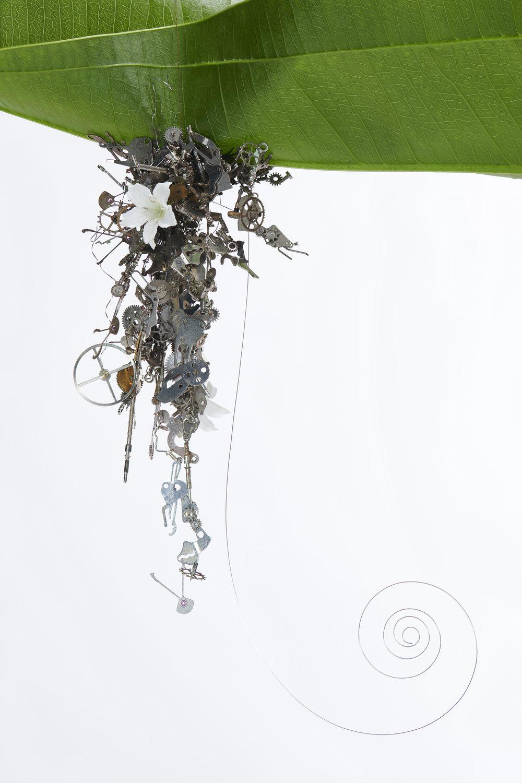 kumkum fernando liliy.jpg