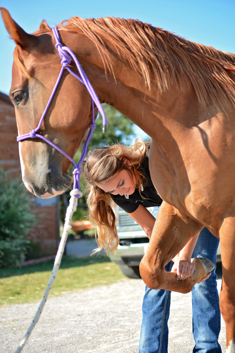 Lameness exams are a large part of Dr. Garrett's practice. Ensuring her patients are sound or on the road to recovery is of primary importance.