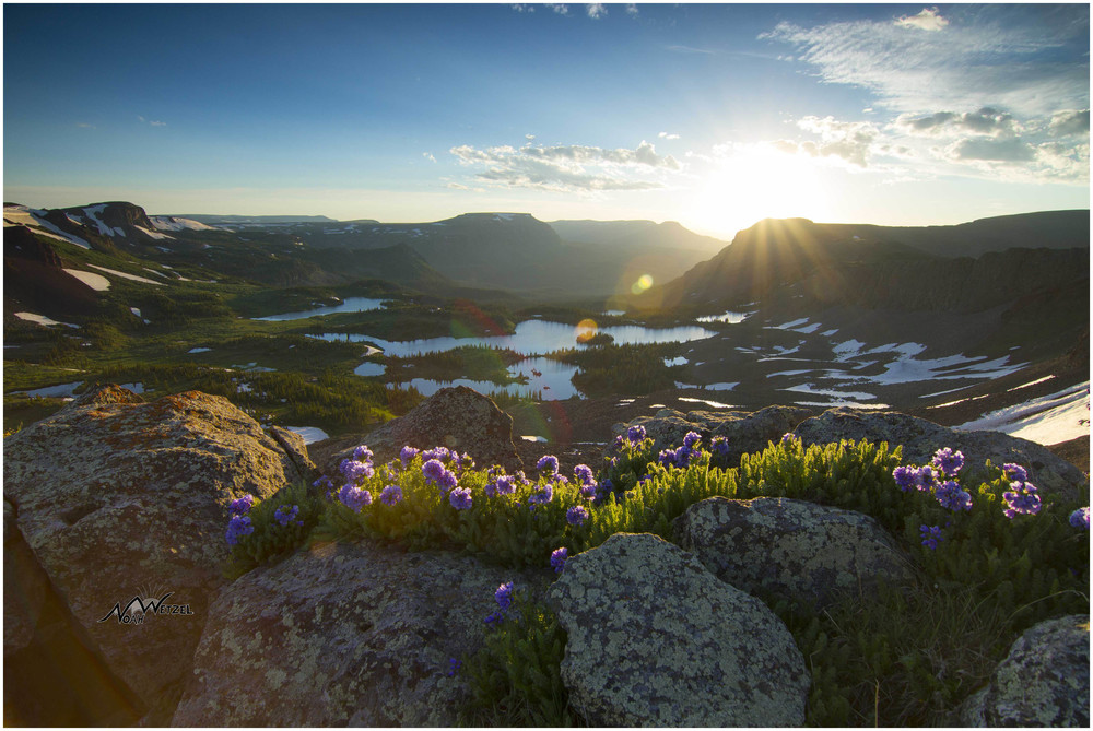 Grove of flowers above Island Lake in the Flat Tops Wilderness, CO