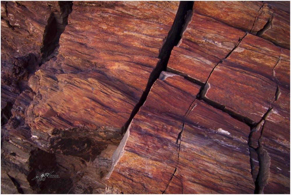 Petrified Wood. Wolverine Rd. Escalante, Utah