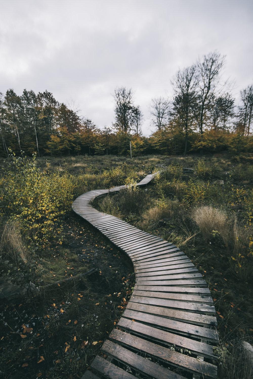 MTB Trail, Hareskov
