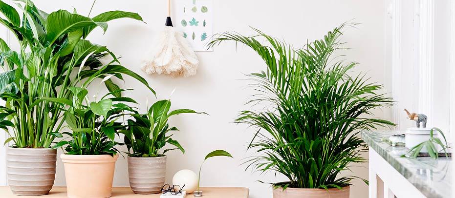 VÃ¥r inne og vÃ¥r ute — leve med planter