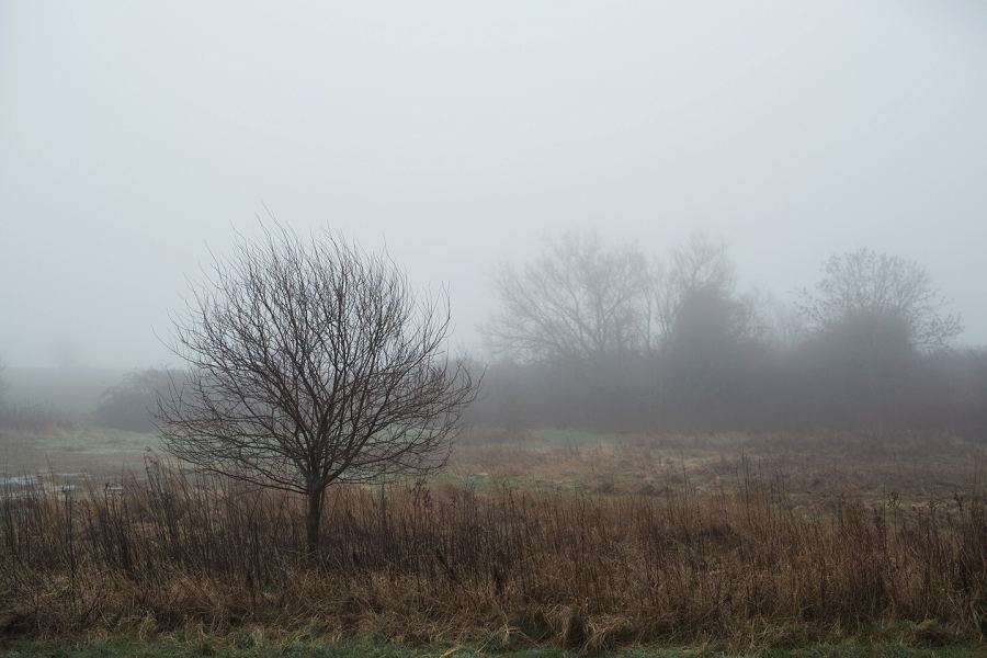 foggy-winter-days-sigridsminde_0217.jpg