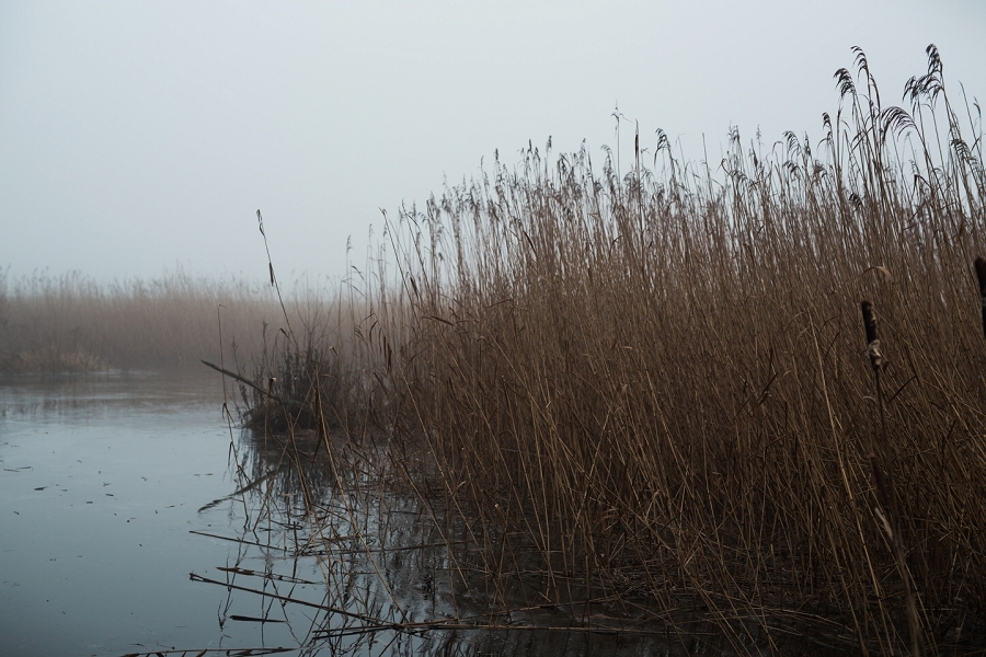 foggy-winter-days-sigridsminde_0219.jpg