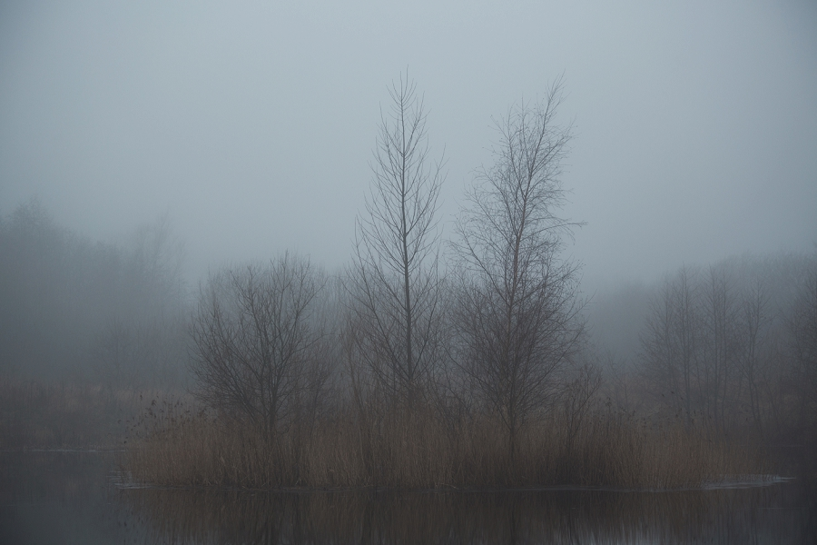 foggy-winter-days-sigridsminde_0230.jpg