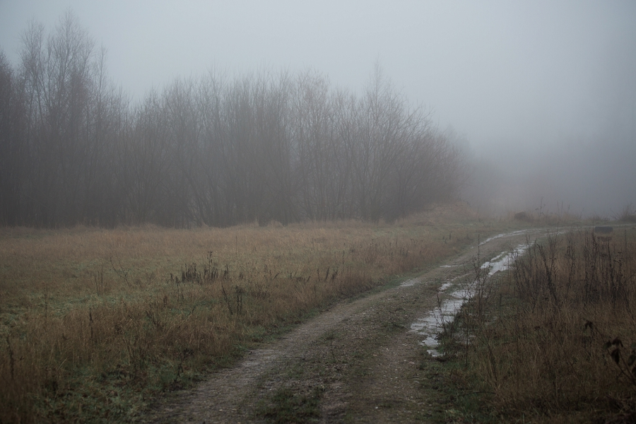 foggy-winter-days-sigridsminde_0231.jpg