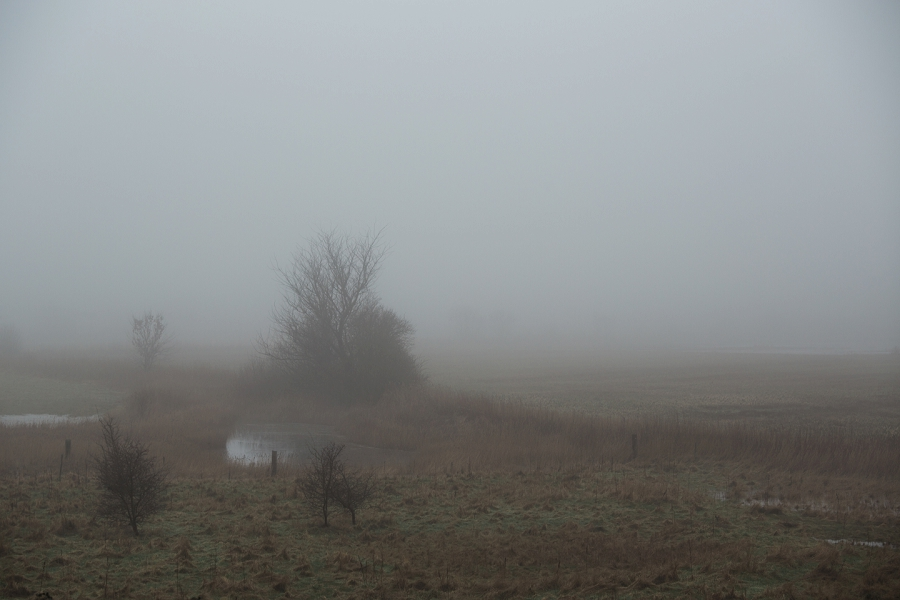 foggy-winter-days-sigridsminde_0235.jpg