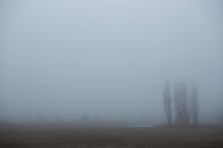 foggy-winter-days-sigridsminde_0237.jpg
