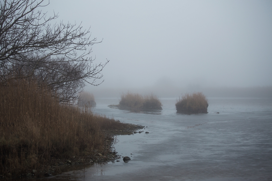 foggy-winter-days-sigridsminde_0246.jpg