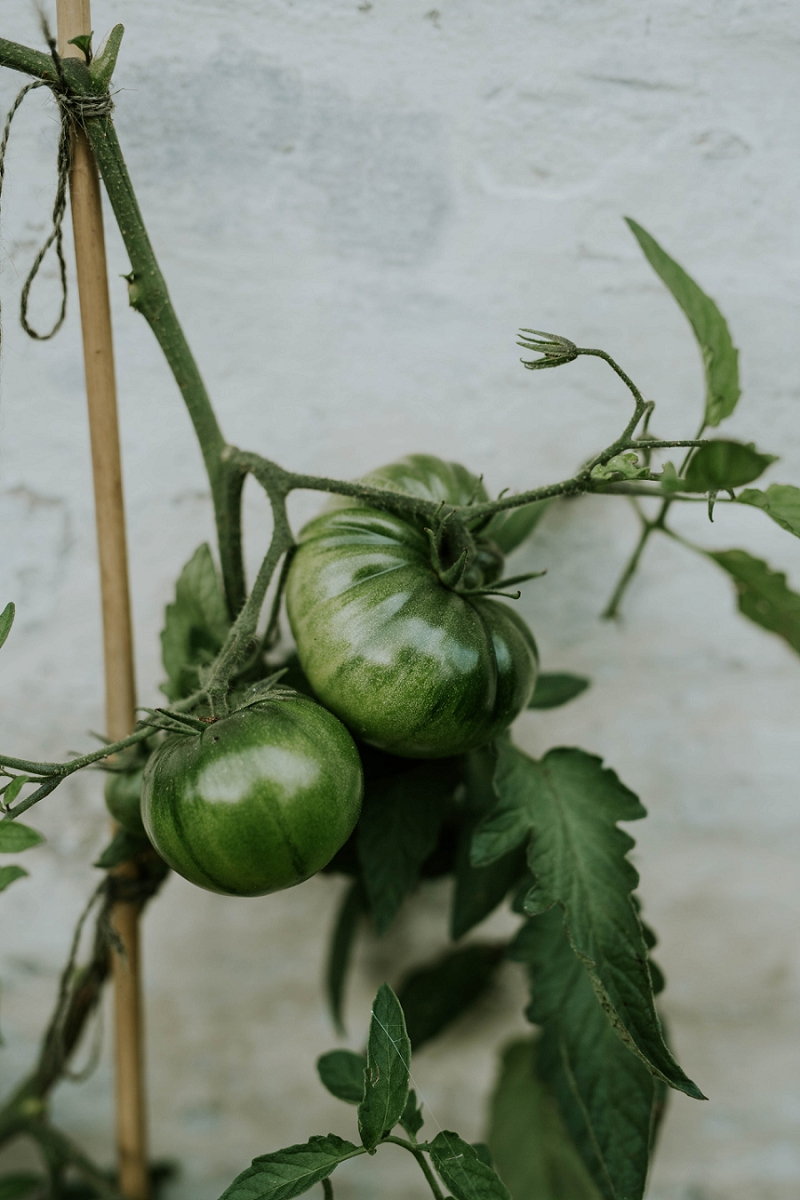 country-living-green-tomatoes