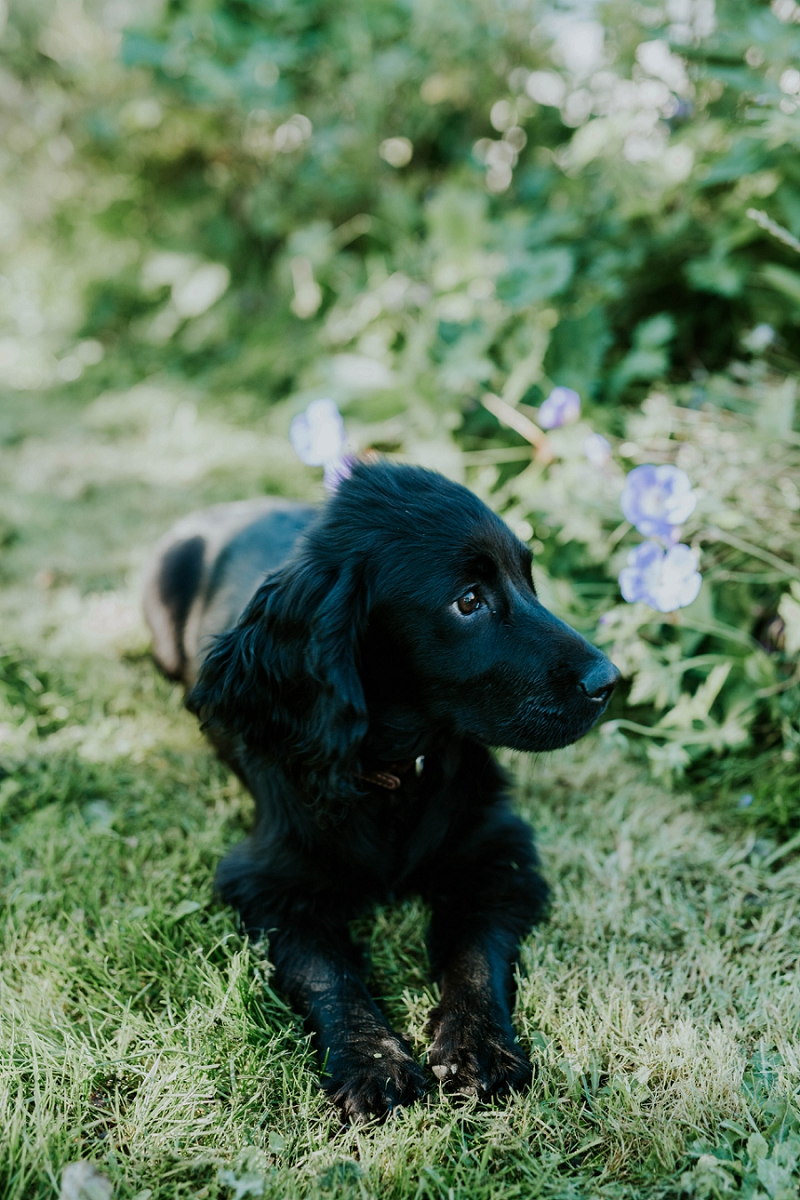 cute-black-cocker-spaniel-puppy
