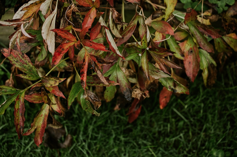 peony-autumn-colour-foliage