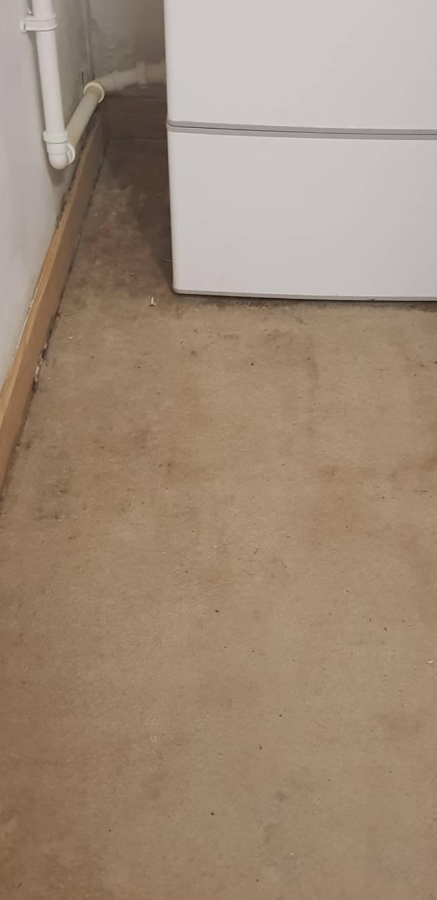 carpet in Kensington is dirty.jpg