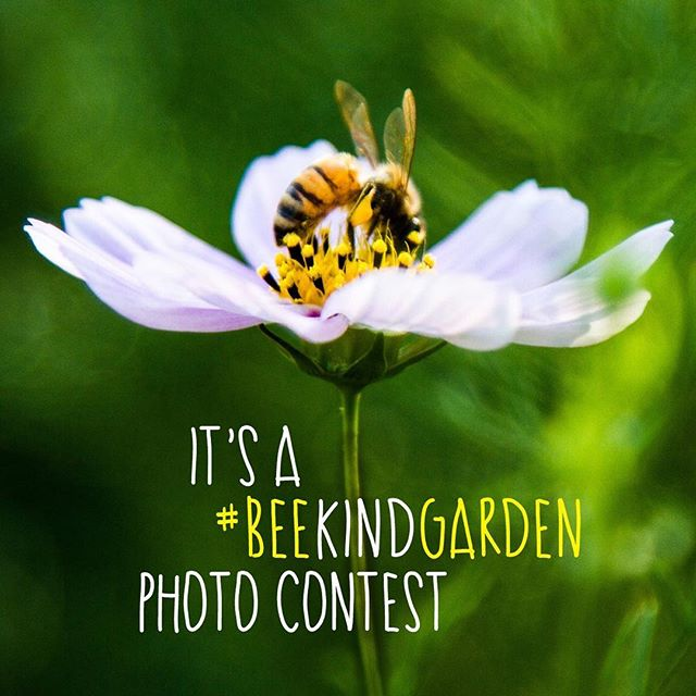Bee_Kind_Garden_Photo_Contest_Promo.jpg
