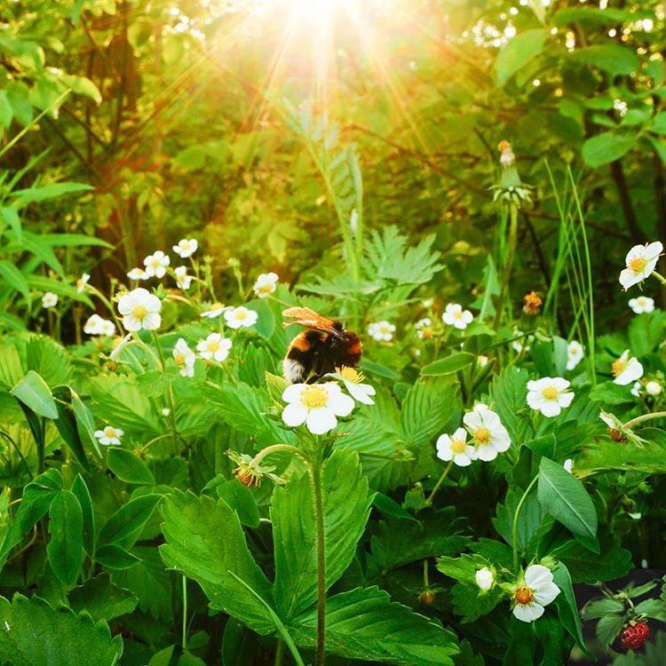 Bee_Kind_Garden_Stawberrys.jpg