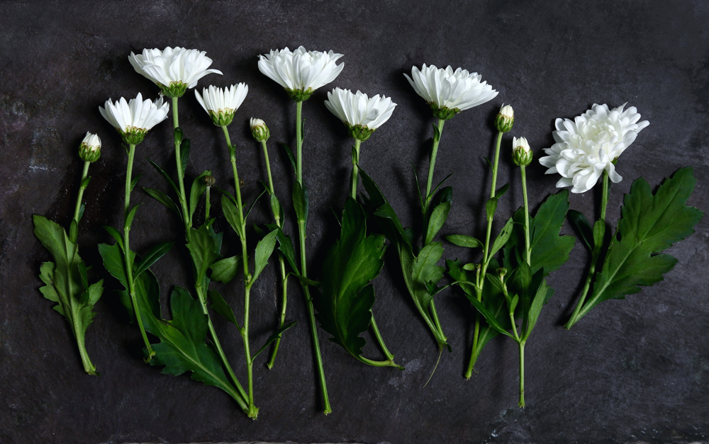 flowers layed out.png