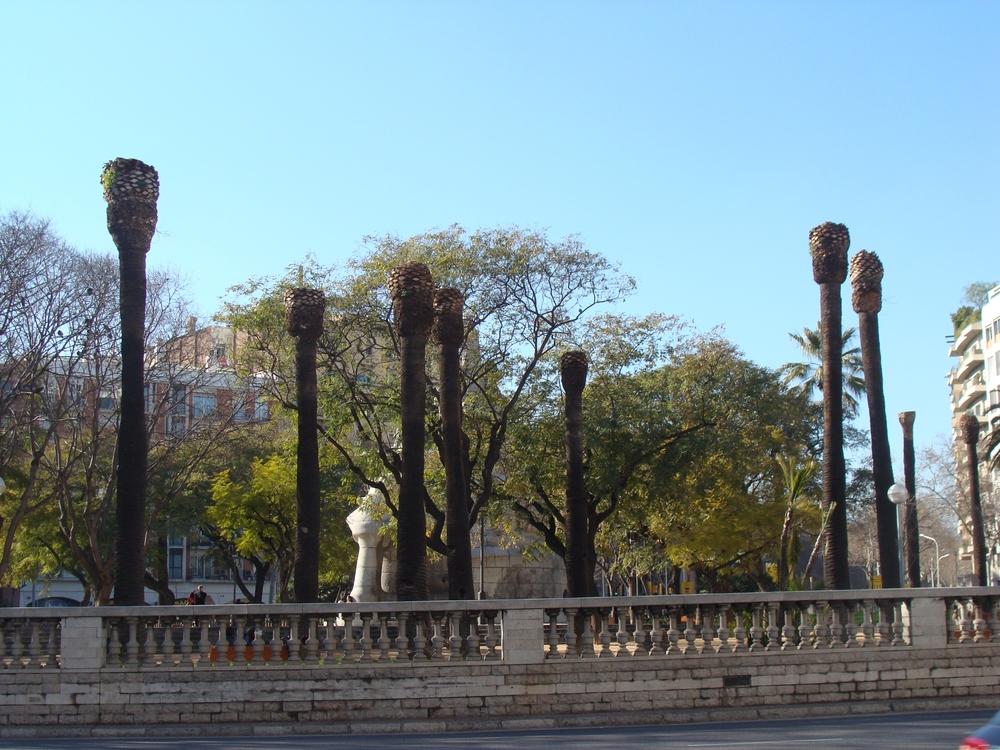 Nepovratni gubitak palmi u Barceloni