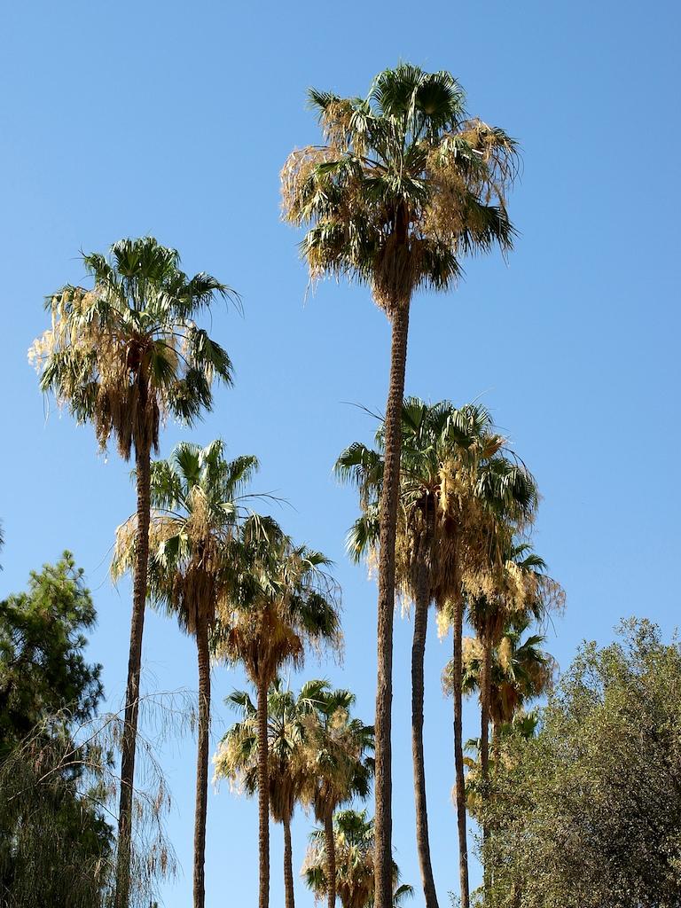 2669740537_60728c16e9_o palm walk at Arizona State University in Tempe, AZ.jpg