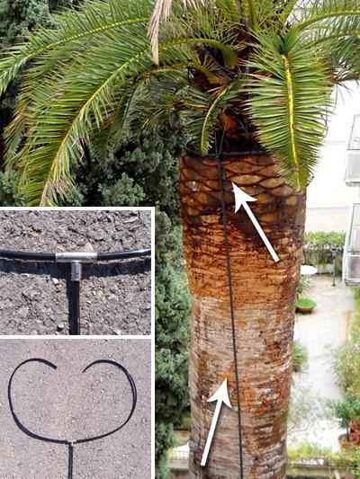 Instaliran sustav dostave preparata u središte palme