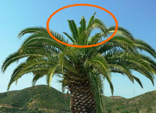 Palm with cmrcle.jpg