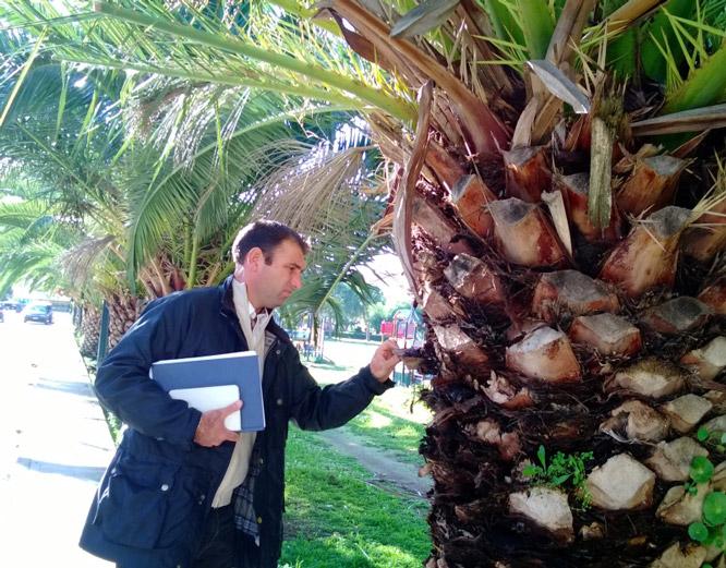 Redoviti pregled palmi