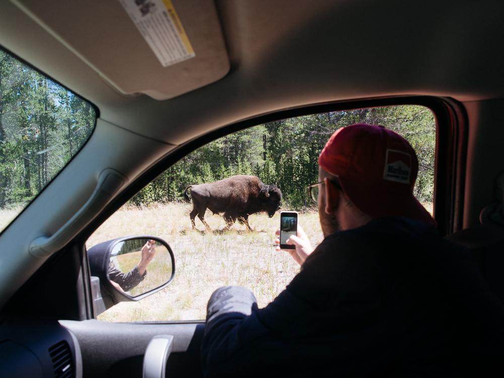 wyoming camp camping road trip america yall vsco olympus pawlowski bison