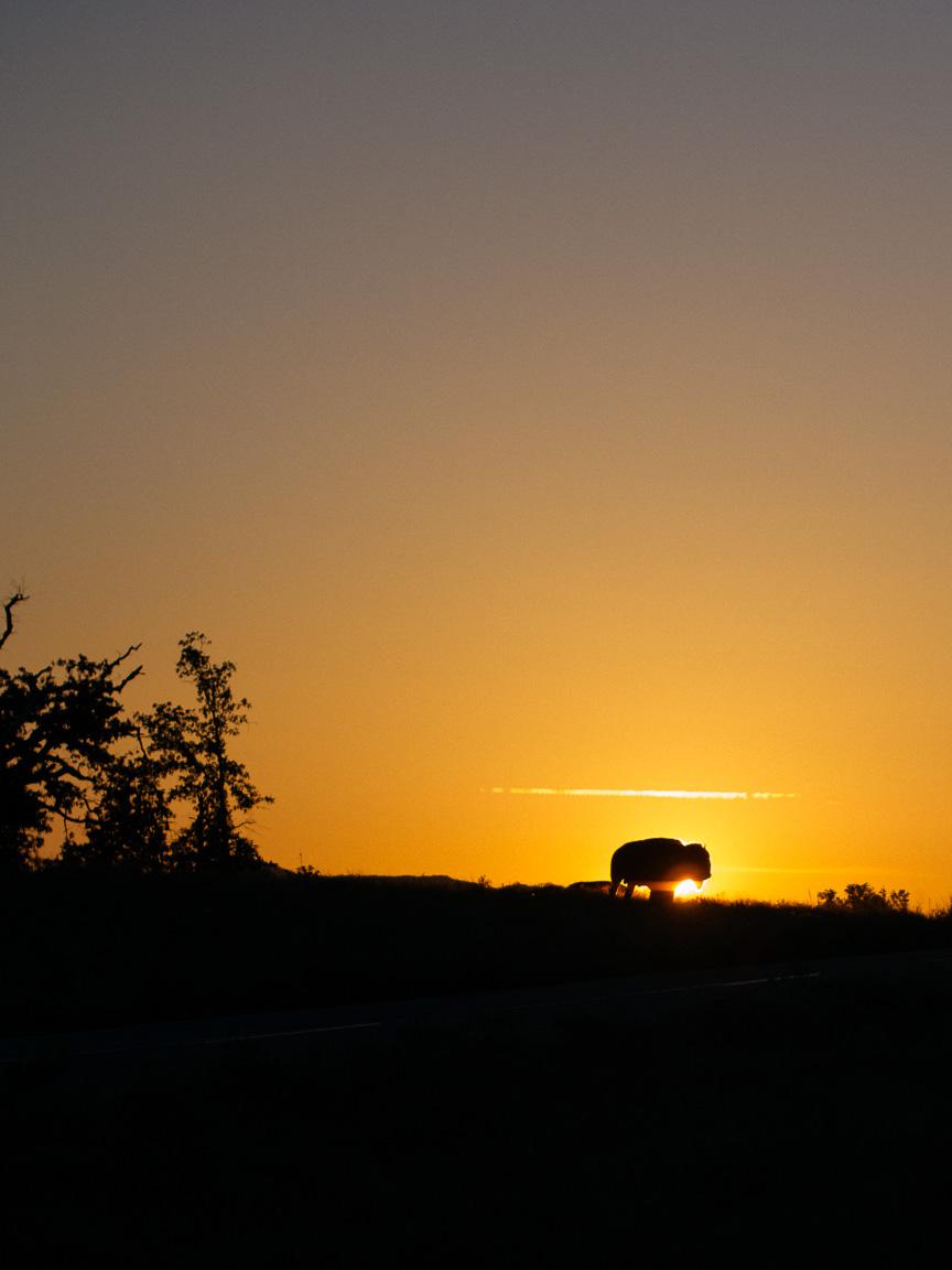 arkansas oklahoma bison camp camping ozarks truck dog america yall pawlowski vsco olympus omd em5 buffalo