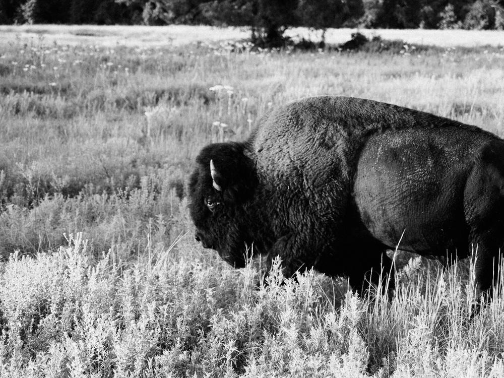 arkansas oklahoma bison camp camping ozarks truck dog america yall pawlowski vsco olympus omd em5 herd