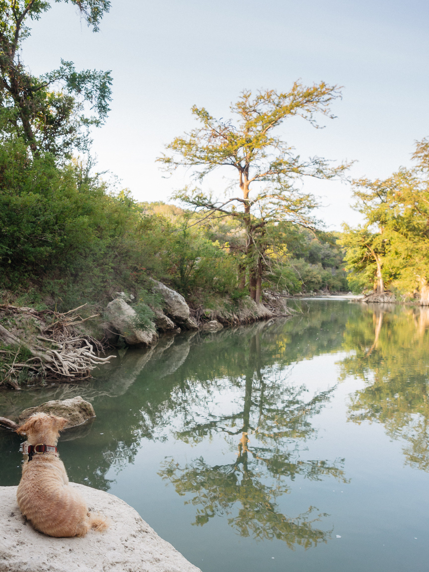 guadalupe river texas dog pup america yall vsco olympus trees piper puppy