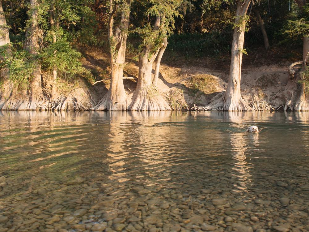 field trip - guadalupe river