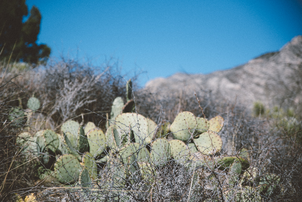 guadalupe mountains national park america yall jeremy pawlowski vsco texas camp cactus