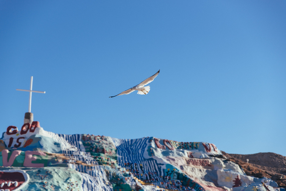 salvation mountain california arizona slab city salton sea vsco nikon america yall pawlowski americayall bird